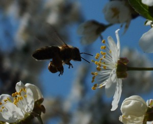 Spring with a bee